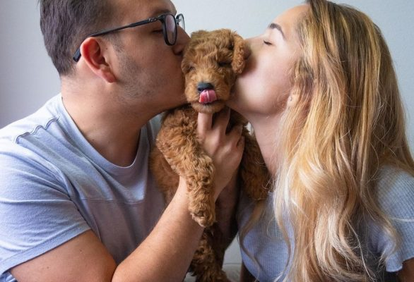 man and woman holding goldendoodle