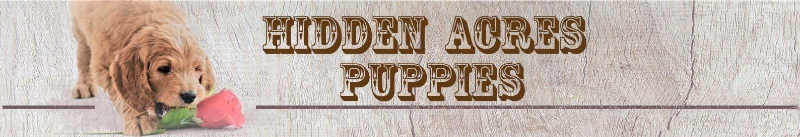 Hidden Acres Puppies